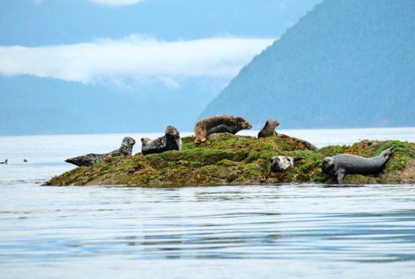 Robben an der Sunshine Coast, British Columbia | Foto: Oliver Meding