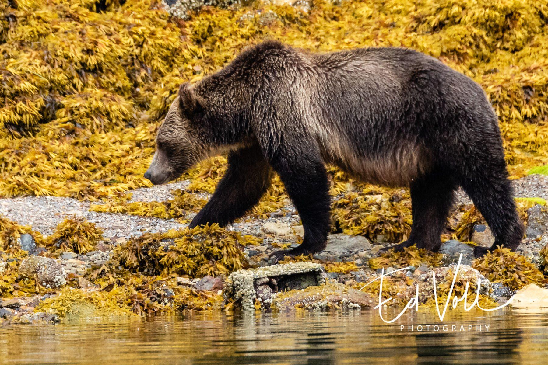 Foto: Ed Voll, British Columbia