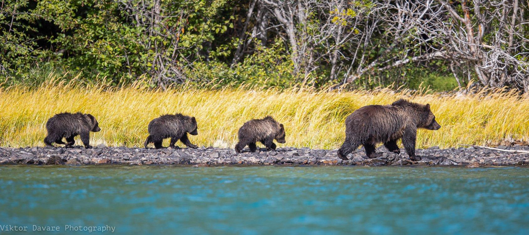 Bären in Kanada: Wie verhalte ich mich richtig?
