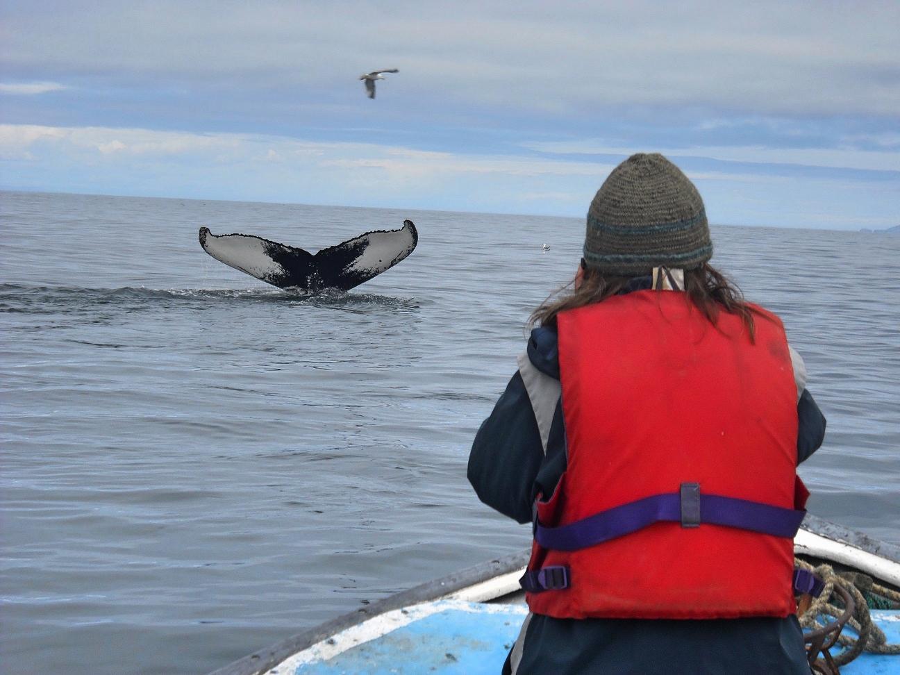 Im Fischerboot, um Buckelwale zu fotografieren | Bernadette A. Calonego